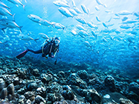 Scuba Diving Center in Las Galeras Dominican Republic. Best Snorkeling Trips in Las Galeras Dominican Republic. Las Galeras Dive Shop & Scuba Diving Center with Padi Certified Instructors in Las Galeras town.
